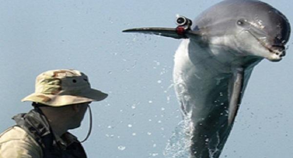 10 Faits Prouvés sur les Dauphins que Vous Ne Savez Sûrement Pas 4