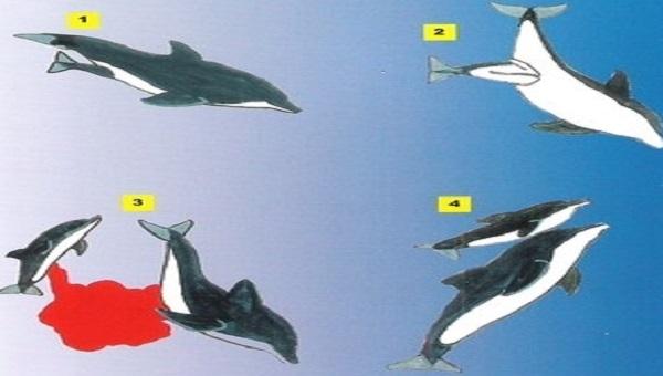 10 Faits Prouvés sur les Dauphins que Vous Ne Savez Sûrement Pas 5