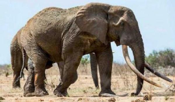10Faits Surprenants sur les Eléphants que Vous ne Savez Pas 1