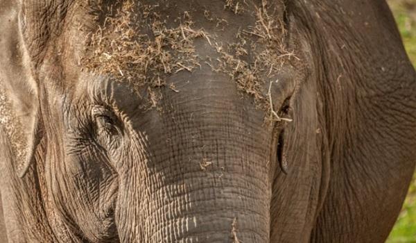 10Faits Surprenants sur les Eléphants que Vous ne Savez Pas 2