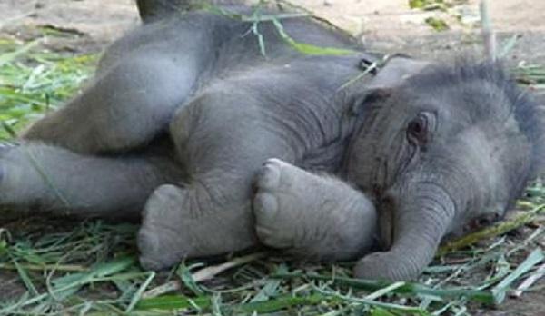 10Faits Surprenants sur les Eléphants que Vous ne Savez Pas 8