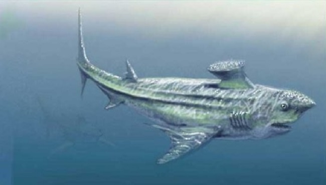 Requin Prehistorique