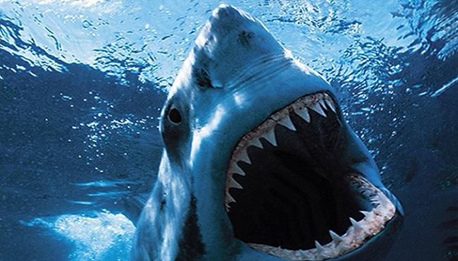 Requin ouvre les machoires