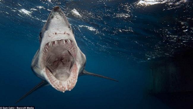 Requin qui attaque