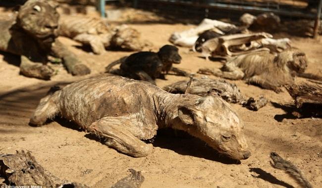Animaux morts de faim au Zoo