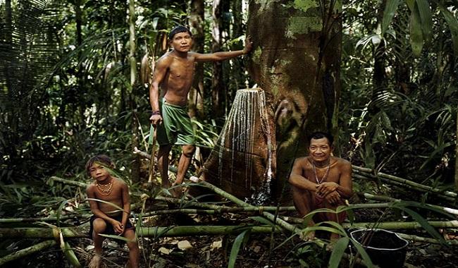 Tribu Pirahâs