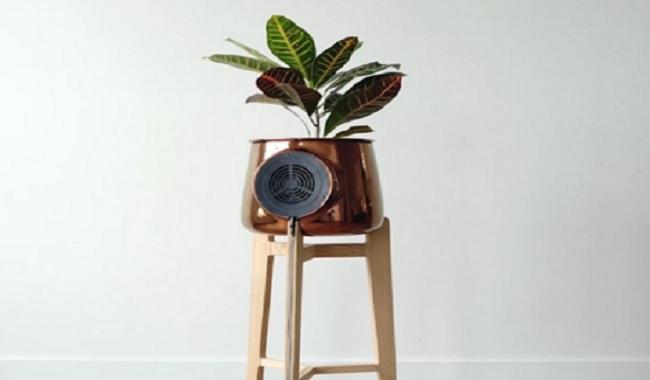 cette petite plante peut r duire les toxines dans votre maison de 85 je savais pas. Black Bedroom Furniture Sets. Home Design Ideas