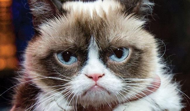 Grumpy Cat a gagné beaucoup d'argent