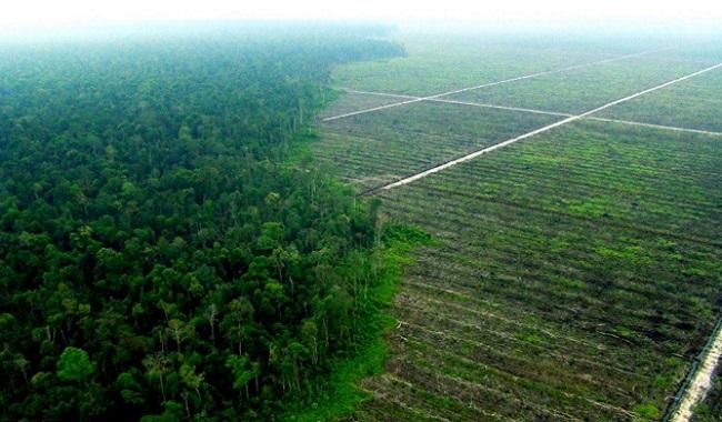 Huile de palme déforestation en Indonésie