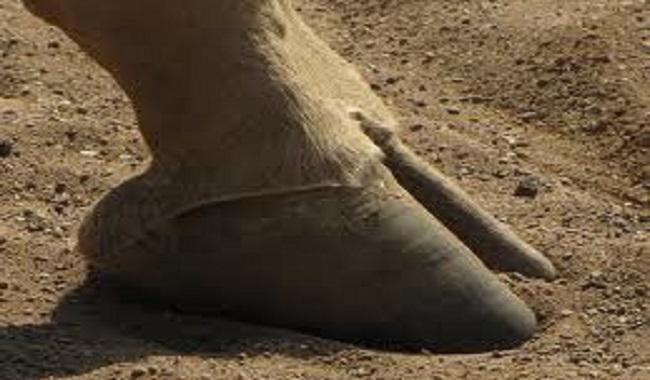 10 faits surprenants sur les girafes je savais pas for Prix d une girafe a poncer