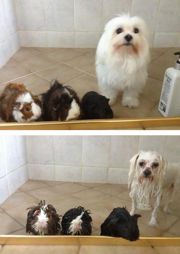 Chien et chats avant et aprés bain (1)