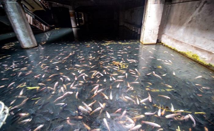 Des poissons dans un centre commercial