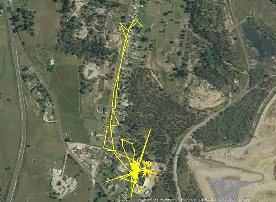 GPS traque chat parcourant 3 kilomètres