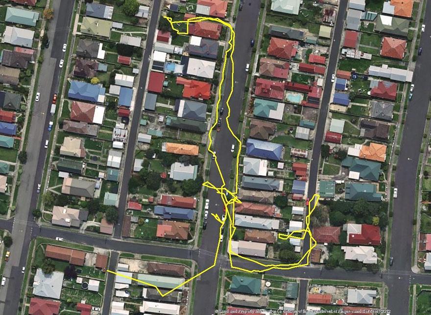 GPS traque les mouvements du chat de nuit
