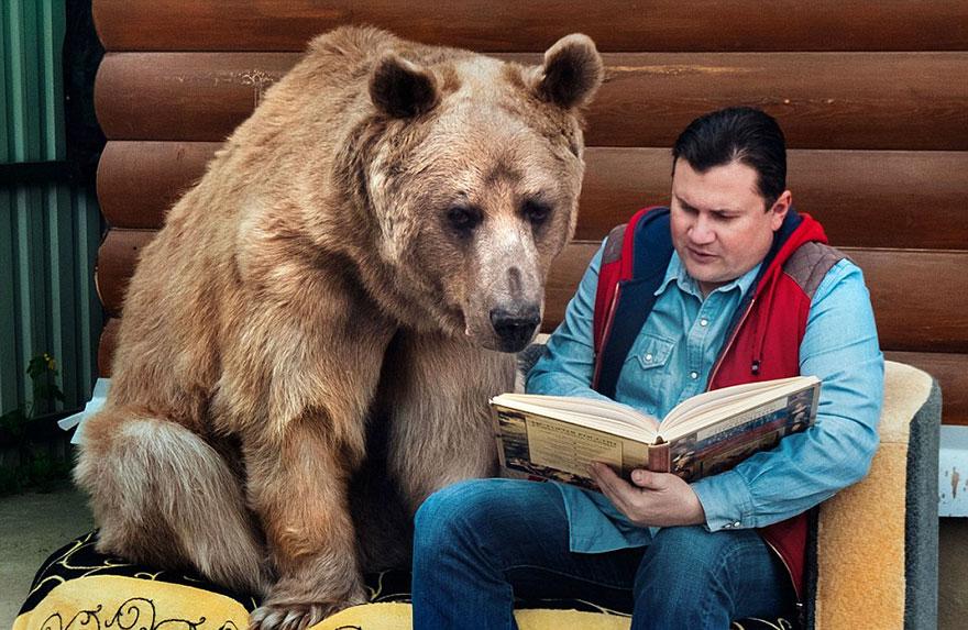 Ours adopté par des Russes