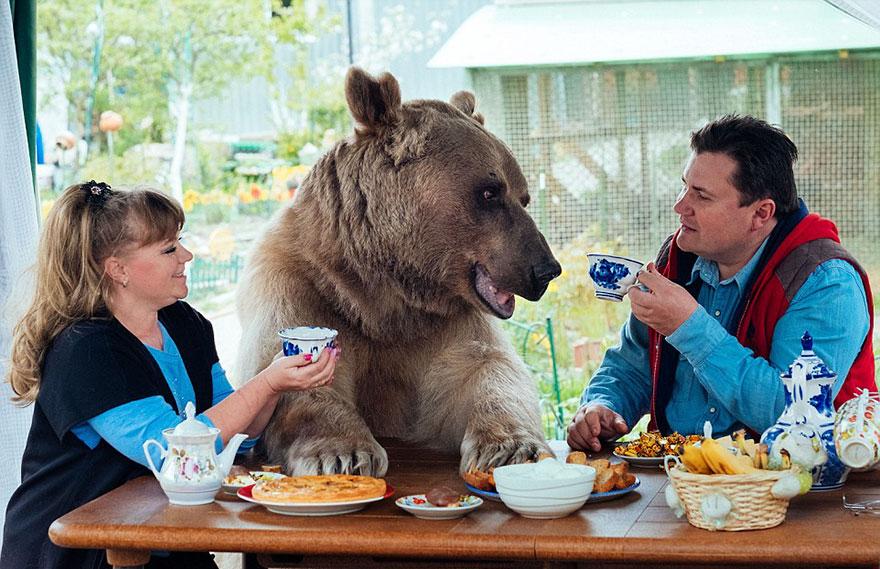 Ours adopté par un couple Russe