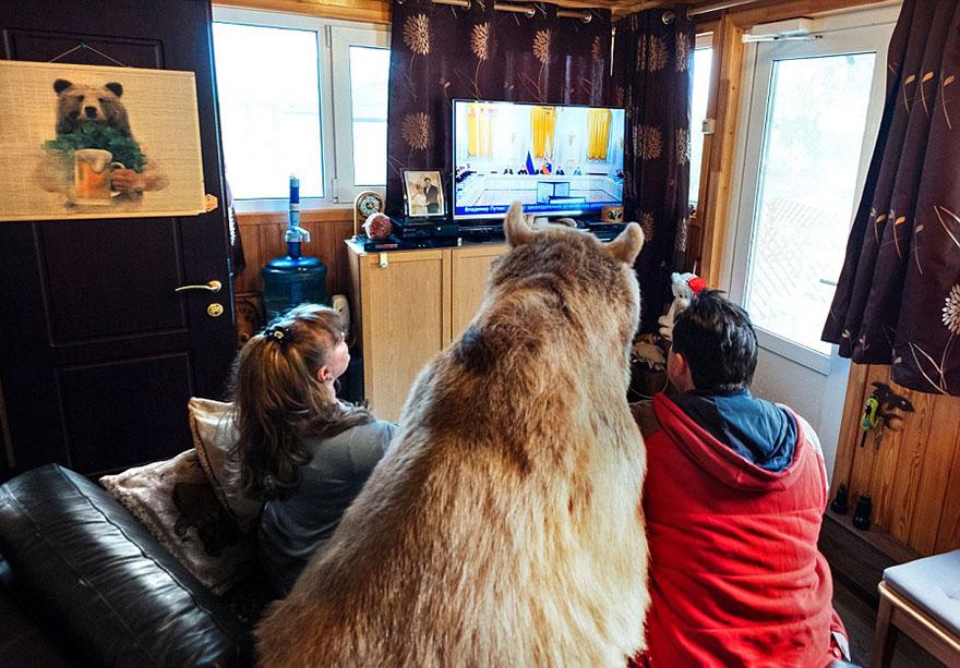 Ours adopté regarde la télé