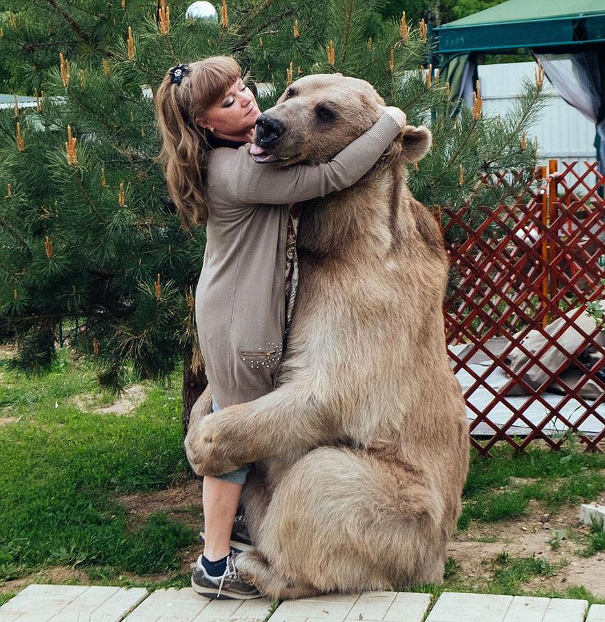 Ours en bonne santé sauvé