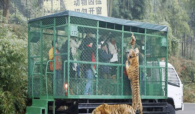 Zoo Chine