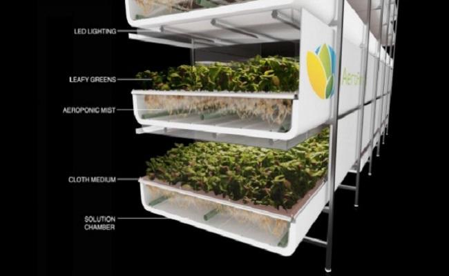 AeroFarms culture de légumes