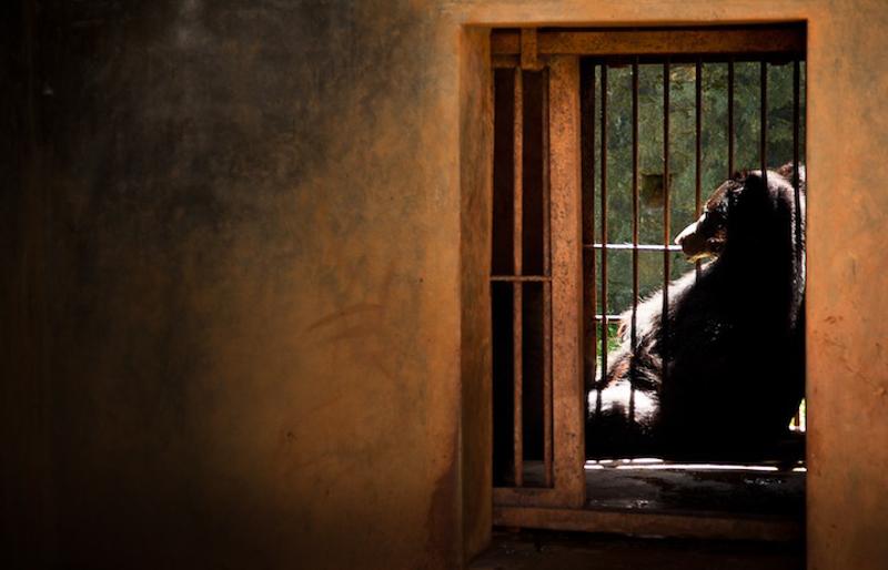 Captivité ours zoo