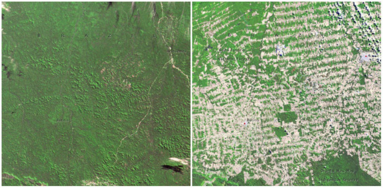 Forêt Rondonia avant et aprés