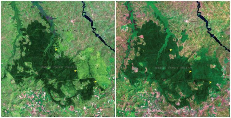 Forêt de Mariba