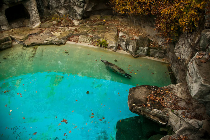 Guy Lacombe Zoo