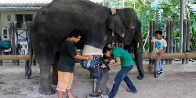 Hopital pour éléphants en Thailande