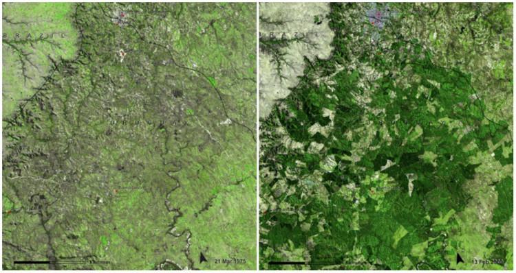 Les forêts d'Uruguay