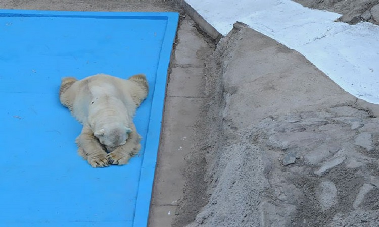 Ours polaire Arturo Décédé en Argentine