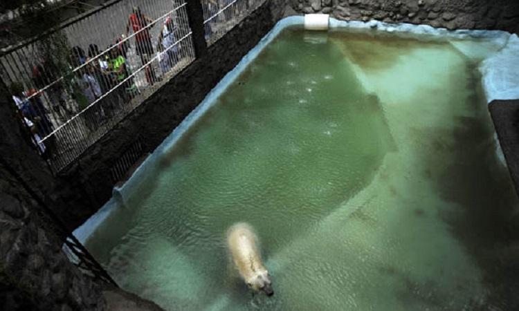 Ours polaire en captivité mort en Argentine