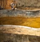 8 photos qui prouvent que les zoos sont des prisons pour animaux
