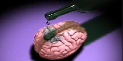 Le cerveau et l'alcool