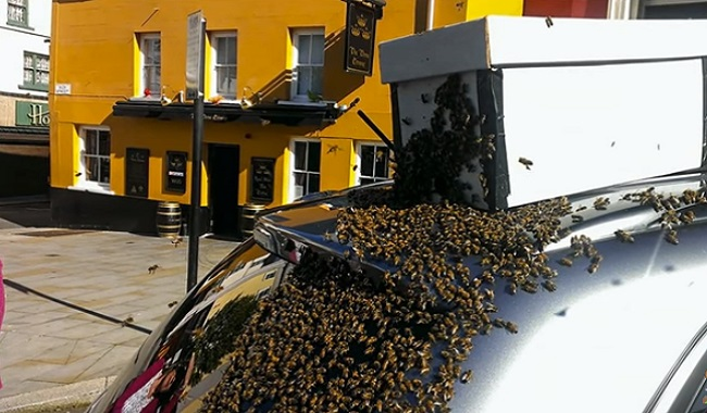 Reine abeille suit une voiture