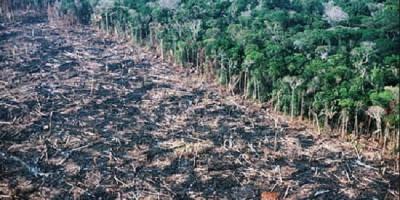 Amazonie déforestation