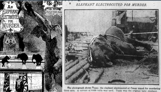 1903 éléphant électrocuté