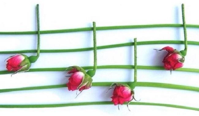 Les fleurs aiment la musique