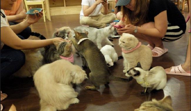 Cat Cafe au Japon