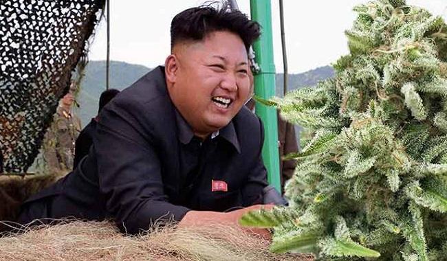 Le cannabis légal en Corée du Nord