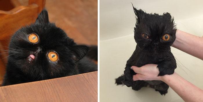 Animaux prennent bain - Copie