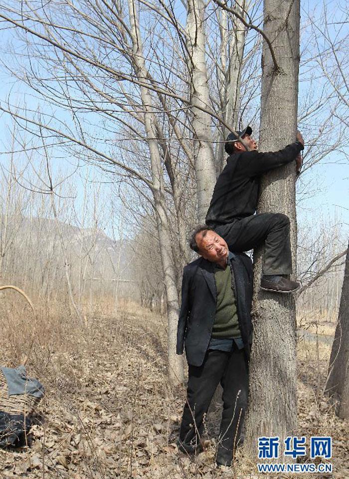 Aveugle receuille bouture d'arbres