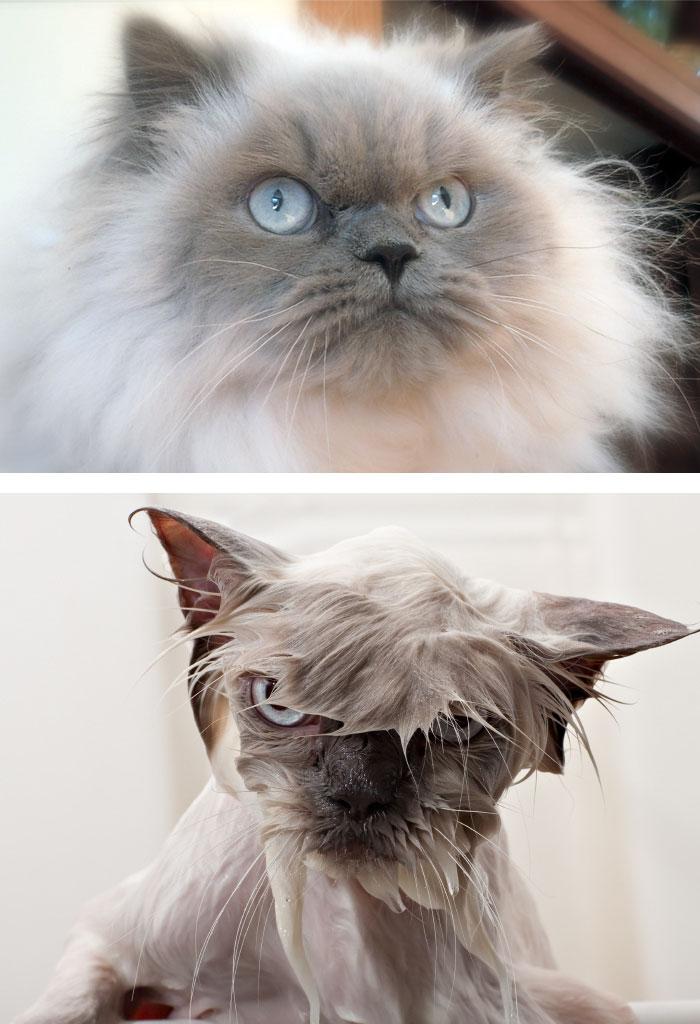 Chien et chats avant et aprés bain (2)