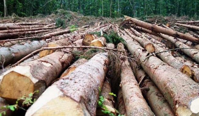 Déforestation 0 en Norvège