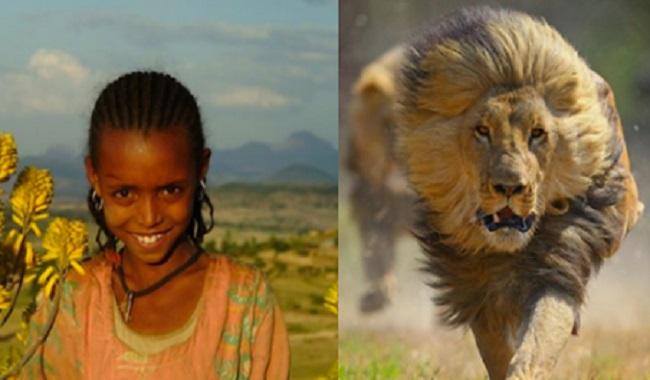 Lions sauvent une éthiopienne