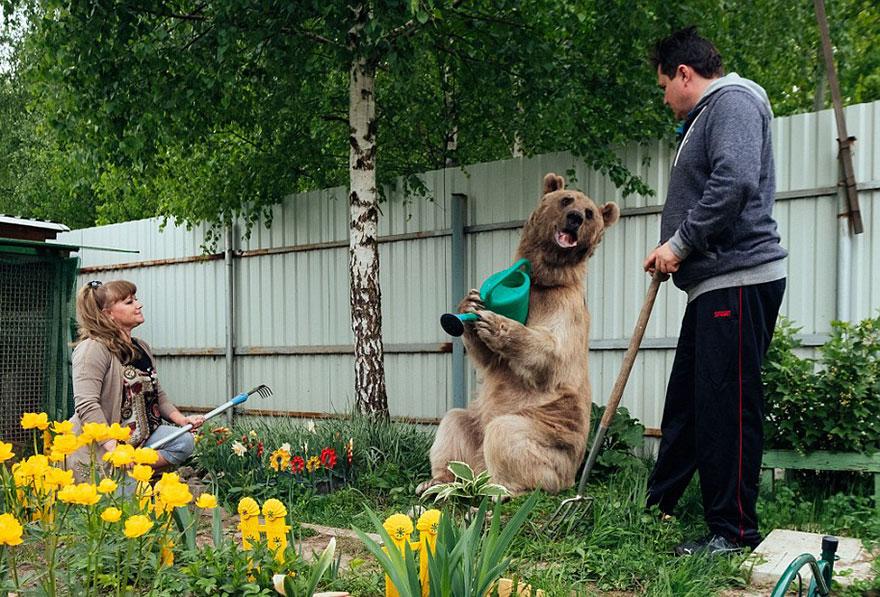 Ours fait le jardin
