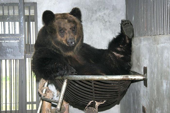 Ours sauvé fait la sieste