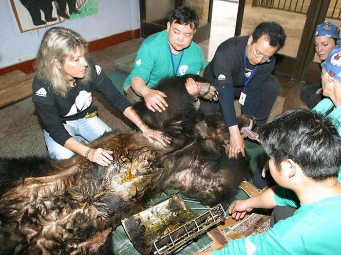 Ours torturé en Chine
