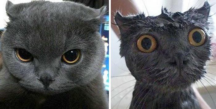 Tête du chat avant et aprés un bain