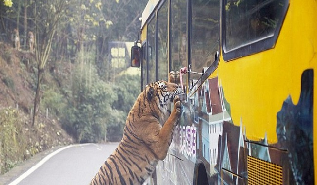 Zoo avec animaux dans leurs habitats naturels en Chine